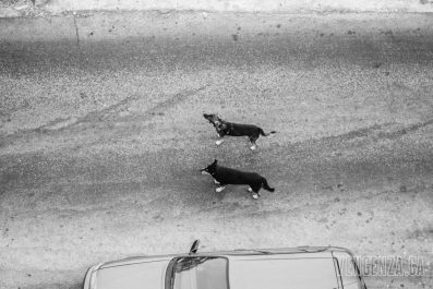 Stray dogs wandering the streets | Piraeus, Greece | Joanna Glezakos