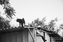 A stray dog stands guard above my uncle's home | Piraeus, Greece | Joanna Glezakos