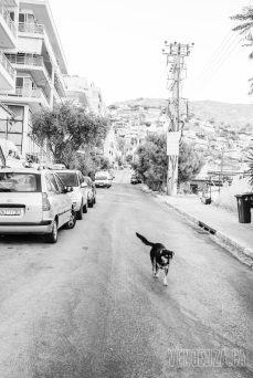 He owns these streets | Piraeus, Greece | Joanna Glezakos
