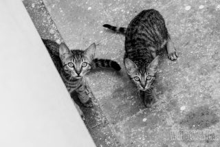 A stray cat found a safe place to give birth to her litter but they are unable to escape | Piraeus, Greece | Joanna Glezakos