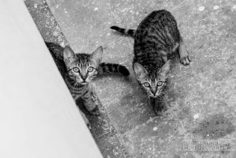 A stray cat found a safe place to give birth to her litter but they are unable to escape   Piraeus, Greece   Joanna Glezakos
