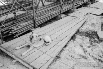A stray dog found it's way to the Parthenon   Athens, Greece   Joanna Glezakos