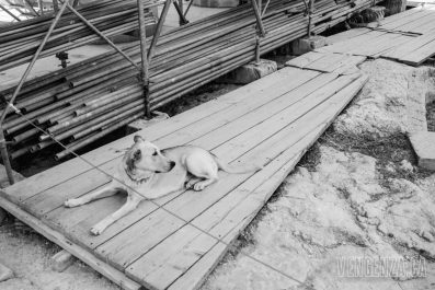 A stray dog found it's way to the Parthenon | Athens, Greece | Joanna Glezakos