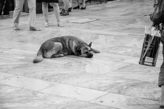 A stray dog sleeping in the middle of the street | Athens, Greece | Joanna Glezakos