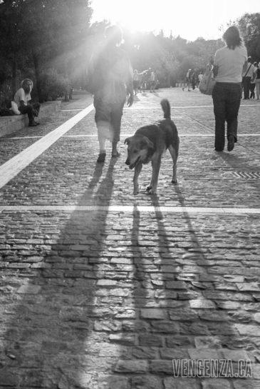 Stray dog at sunset | Athens, Greece | Joanna Glezakos