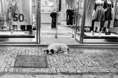 A stray dog sleeps outside a local shop | Athens, Greece | Joanna Glezakos