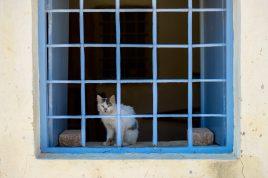 Street Dogs & Cats of Greece | Photo by Joanna Glezakos | Vengenza Fotografia