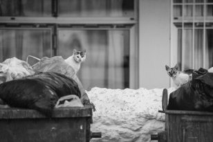 Street Dogs & Cats of Greece | Photo by Joanna Glezakos | Vengenza Fotografia
